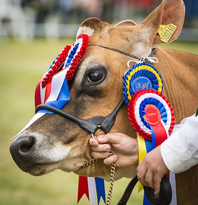 Ipstones Agricultural Show 2015