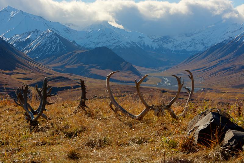 Denali National Park 3