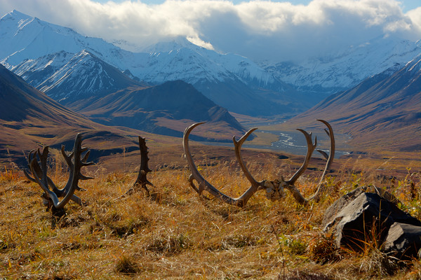 Denali National Park 3