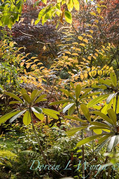 Dietrick fall garden_2112.jpg