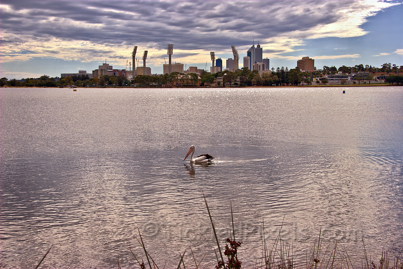 The WACA and the Pelican