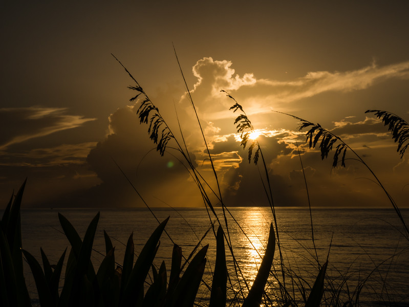 The sun rises over Midtown Beach in Palm Beach on Thursday, August 17, 2017 as Uniola paniculata (otherwise known as sea oats) sway in a slight morning breeze.  (Joseph Forzano / Deep Creek Images)