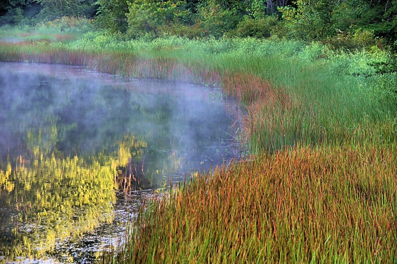 Muscatatuck Pond.jpg