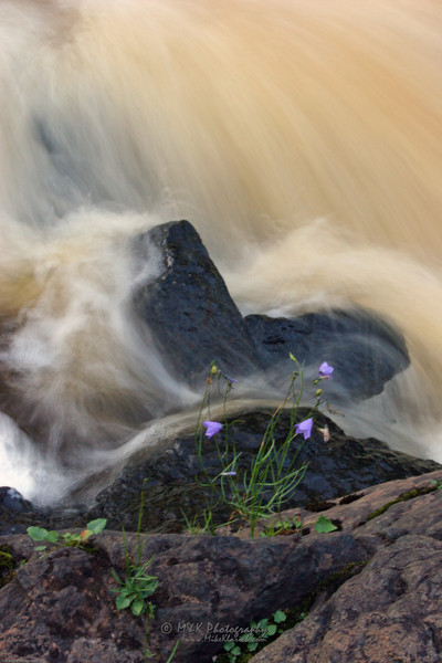 Beaver Bay Blossum-081