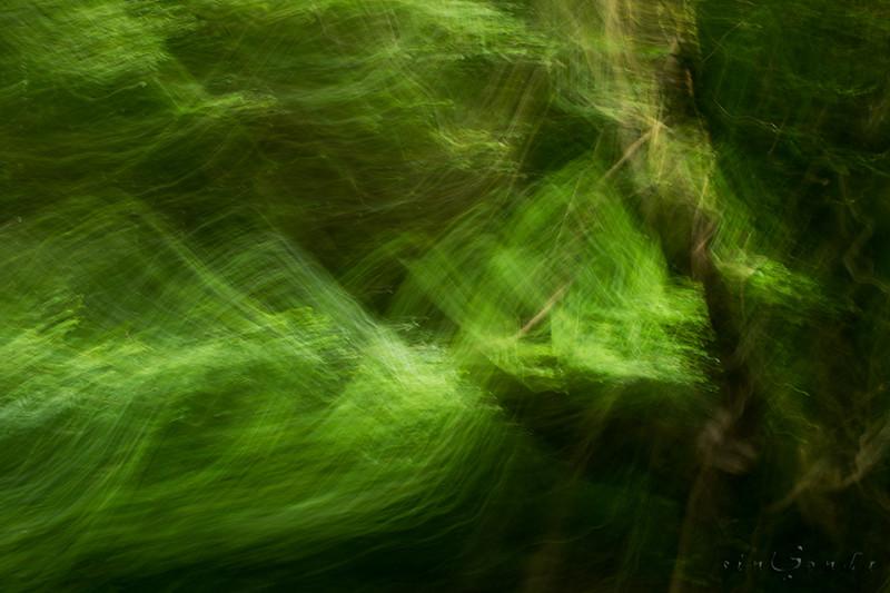 Espíritus del bosque. Brocéliande IV