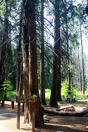 Calaveras Big Trees State Park: Trips