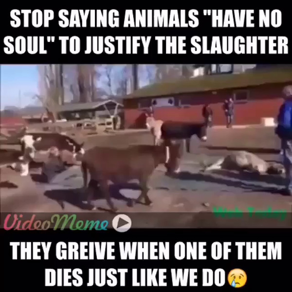 You_can_hear_them_cry__._Only_2_weeks_ago_I_had_a_person_tell_me_it_s_ok_to_slaughter_1.5_BILLION_animals_a_week_as_they_have_no_soul._I_hear_it_online_too._That_s_like_the_biggest_denial_ever__used_to_detach_your_self_from_the_victim__I_get_it__you_.mp4