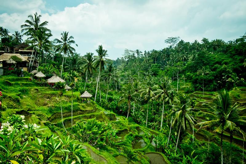 Bali Feb 2014 (41 of 319).jpg