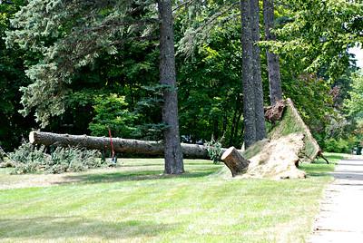2016 07 31: Storm damage, Trees, July 21, 2016 thunderstorm