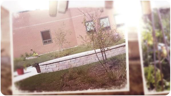 CMMS Courtyard Garden