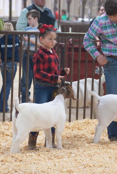 kay_county_showdown_goats_20191207-156.jpg
