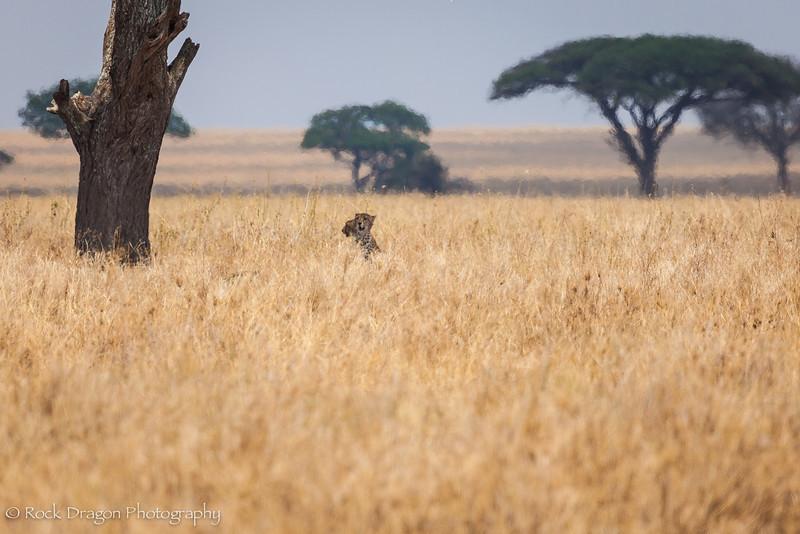 South_Serengeti-45.jpg