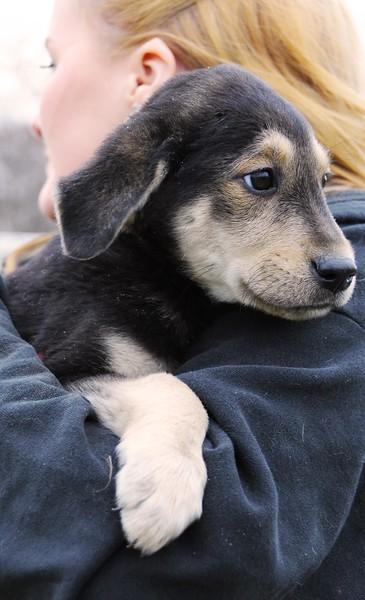 hound 2.jpg