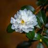 FlowerRedWingPark-003