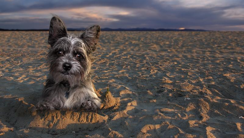 chien-eustache-7.jpg