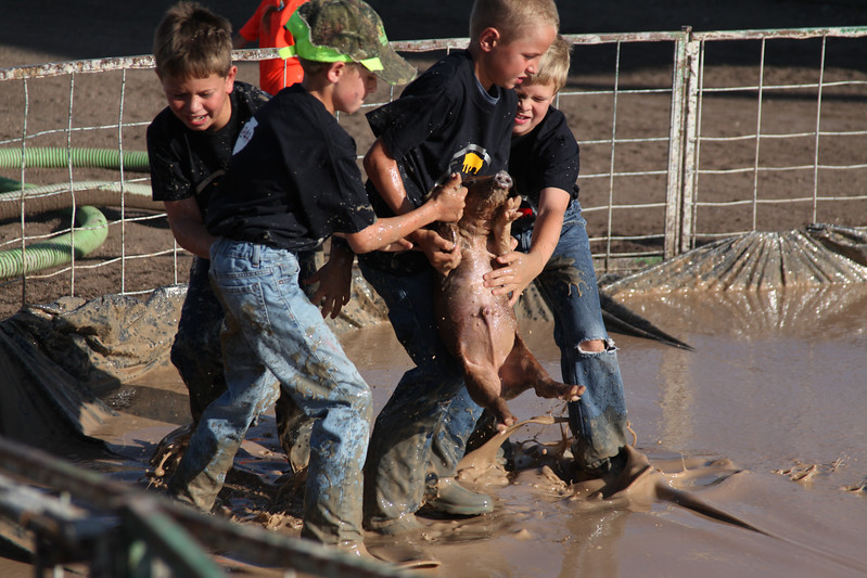 Havre Daily News / Floyd Brandt  Pig Wrestling at Blain County Fair Sunday team The Lil' Squealers