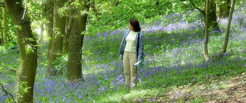 Hodnet Hall, Shropshire  Anita has always dreamed of walking across a bluebell garden and this was as good as it gets. They were in full bloom, well shaded from the sun by the conifers. Gorgeous walk.