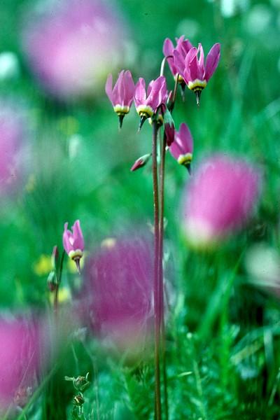 amh FLOWERS (1232).jpg