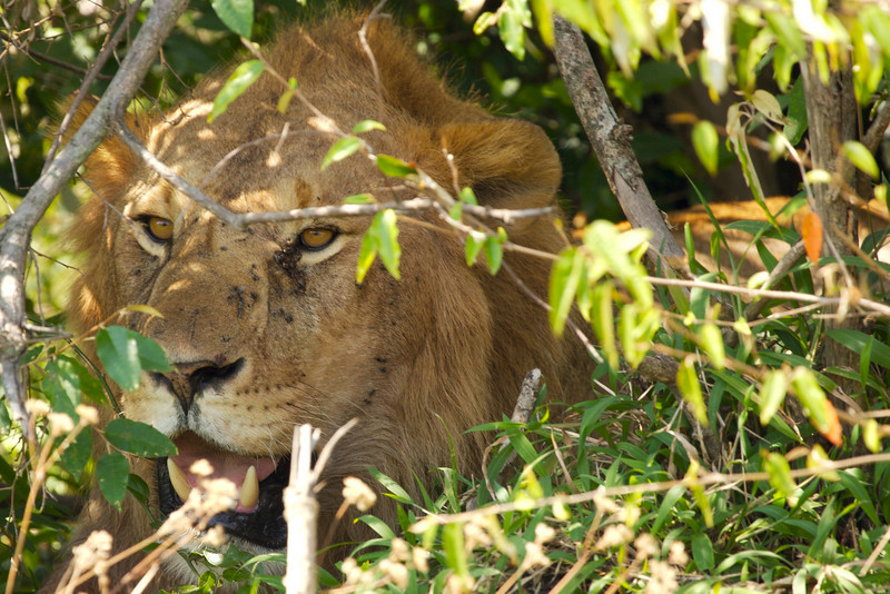 Africa  091.jpg