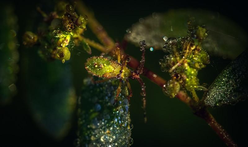 Ugly Bugs&Beautiful Beetles-211.jpg