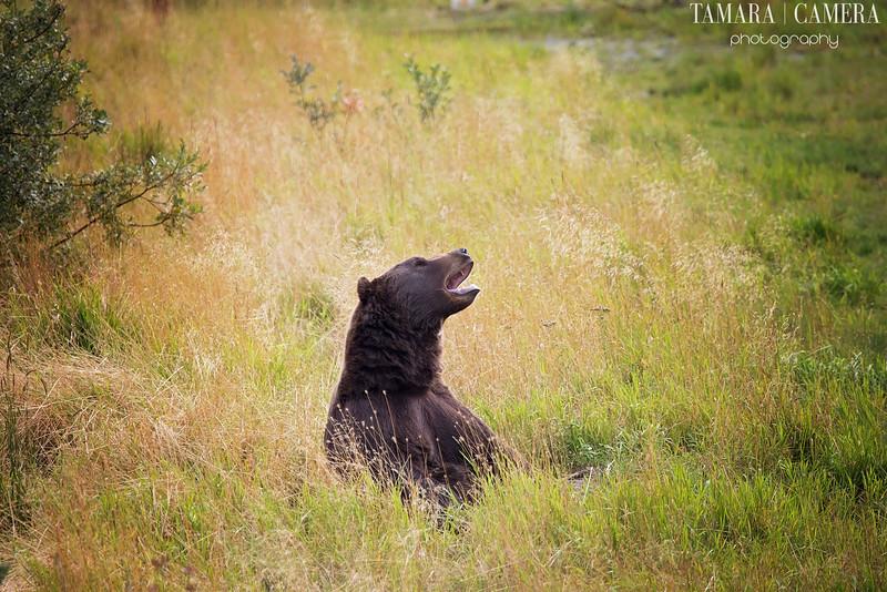 Bear2-3-2.jpg