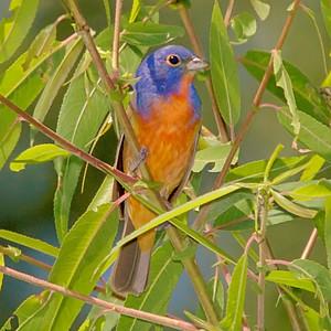 Birding 2007 June-July