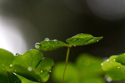Raindrops in Öjen