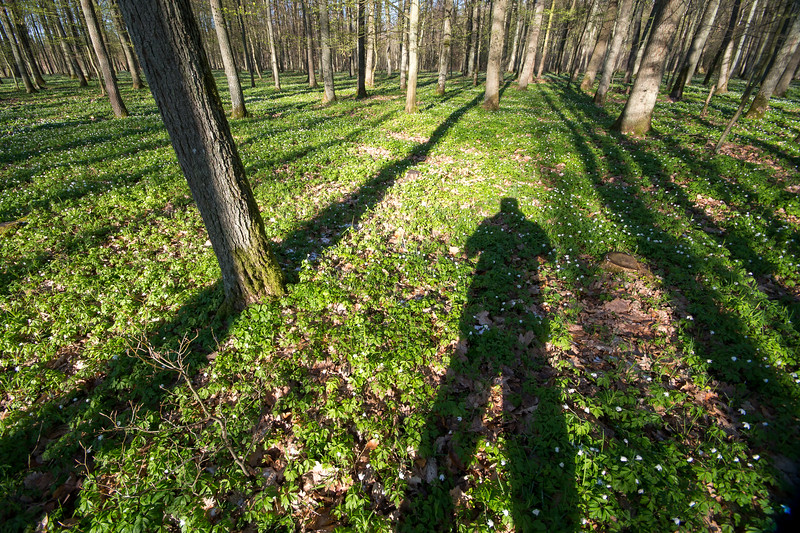 DSC03523 ( - ) - fot. Łukasz Gwiździel.jpg