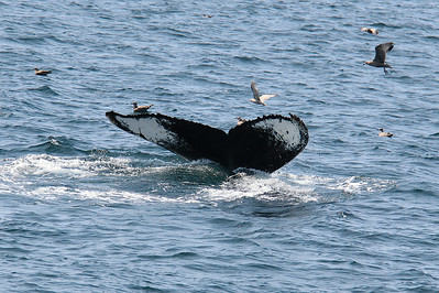 Whale Watch  8/11/14