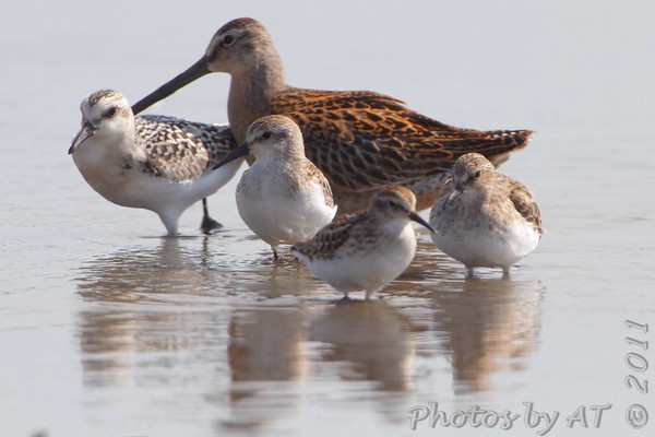 2011-09-13 Riverlands Migratory Bird Sanctuary
