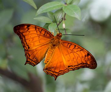 Singapore Airport,  Butterflies