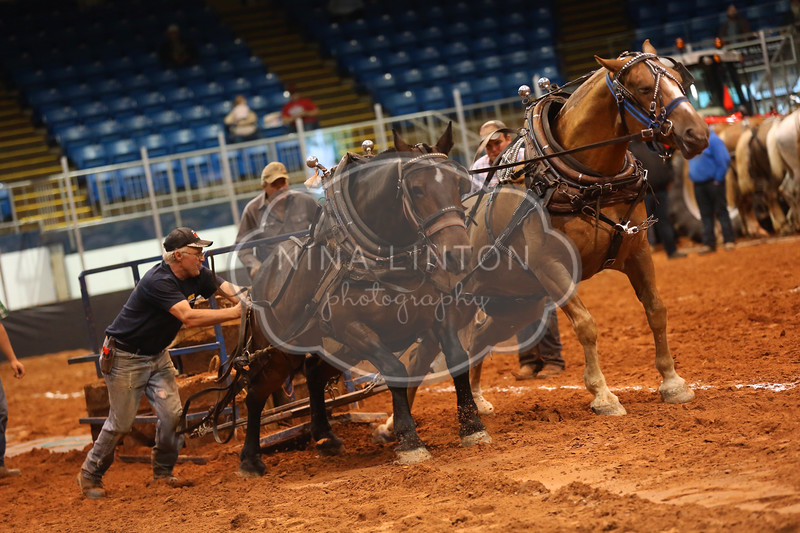 Old Home Week Horse Pull 2016