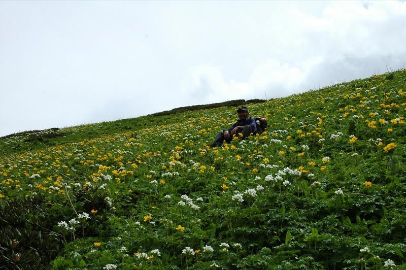 Field of Flowers - Svaneti, Georgia
