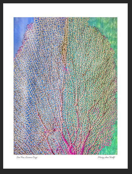 Sea Fan 18x24 framed.JPG