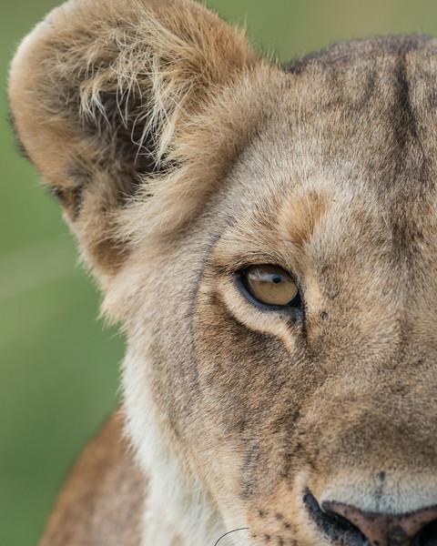January - Masai Mara