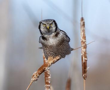 Birds Of Prey In Ontario