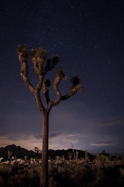 Joshua Tree 08.jpg