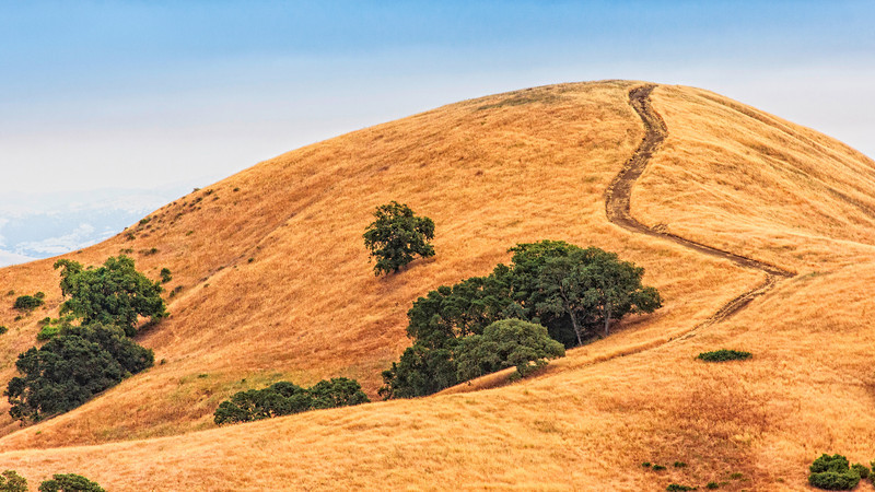 Mount Diablo hills and trees