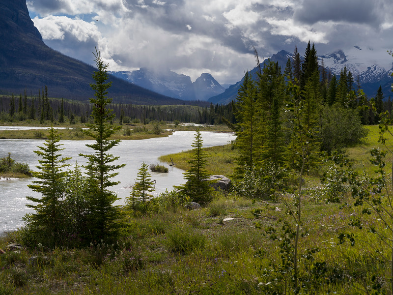 River passing through landscape with mountains in the background, North Saskatchewan River, Icefields Parkway, Jasper, Alberta, Canada