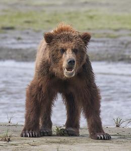 Lake Clarke Bears 2018
