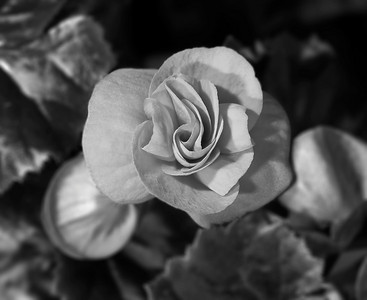 IR flower, macro