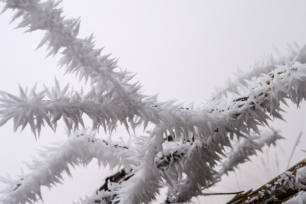 12-12-15 Frosty Morning