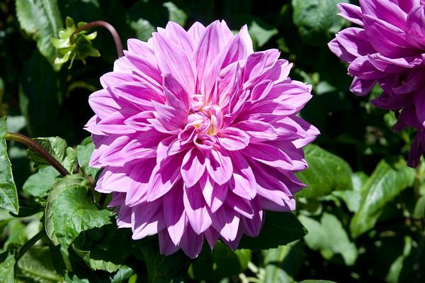 Powell Gardens, Calistoga August 2008