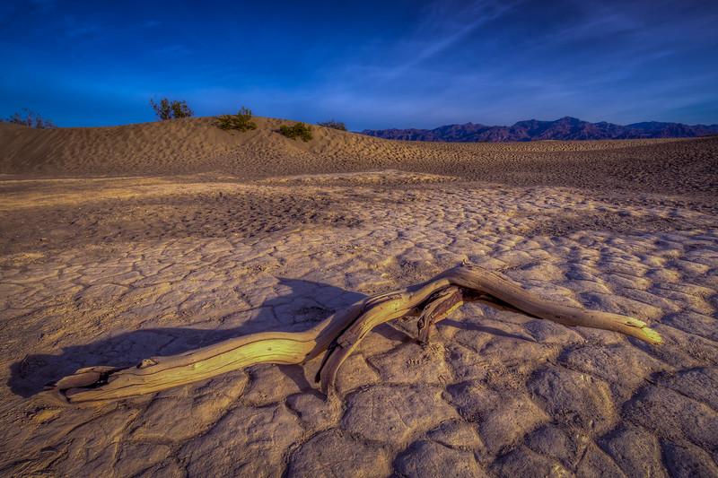 Broken Branch, Mesquite Flats