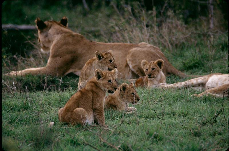 Kenya2_048.jpg