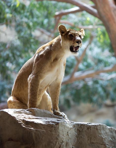 MGM_Lion.jpg