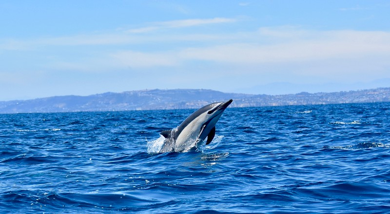 Whale Watching - Dana Point, California