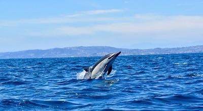 Whale Watching - Dana Point, California
