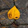 LeavesRedWingPark-004