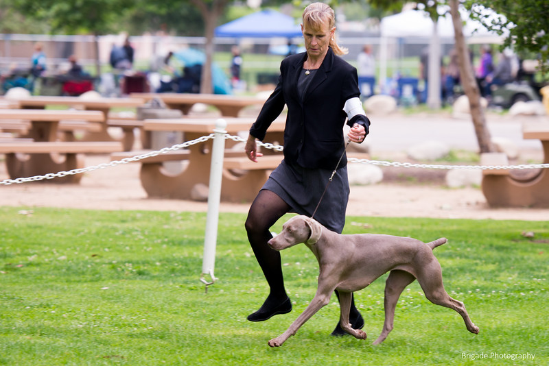 2019 Pasadena Kennel Club-8098.jpg